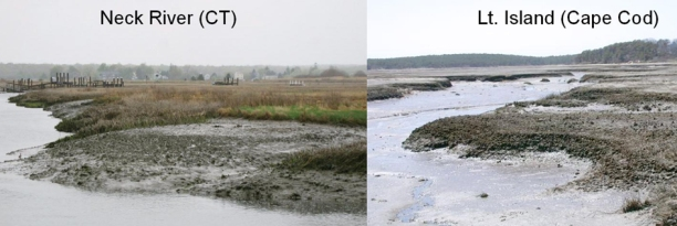 Vegitation die off in New England marshes (photo: Smith NPS)